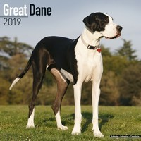 Great Dane (Euro) Wall Calendar 2019