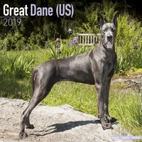 Great Dane (Us) Wall Calendar 2019