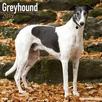 Greyhound Wall Calendar 2019