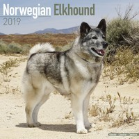 Norwegian Elkhound Wall Calendar 2019