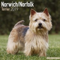 Norwich/Norfolk Terrier Wall Calendar 2019
