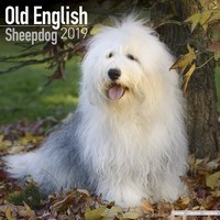 Old English Sheepdog Wall Calendar 2019
