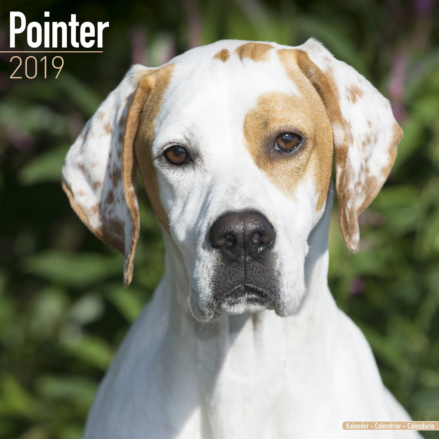 Pointer  Wall Calendar 2019