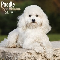Poodle (Toy & Miniature) Wall Calendar 2019