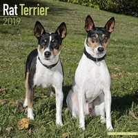 Rat Terrier Wall Calendar 2019