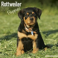 Rottweiler Puppies Wall Calendar 2019