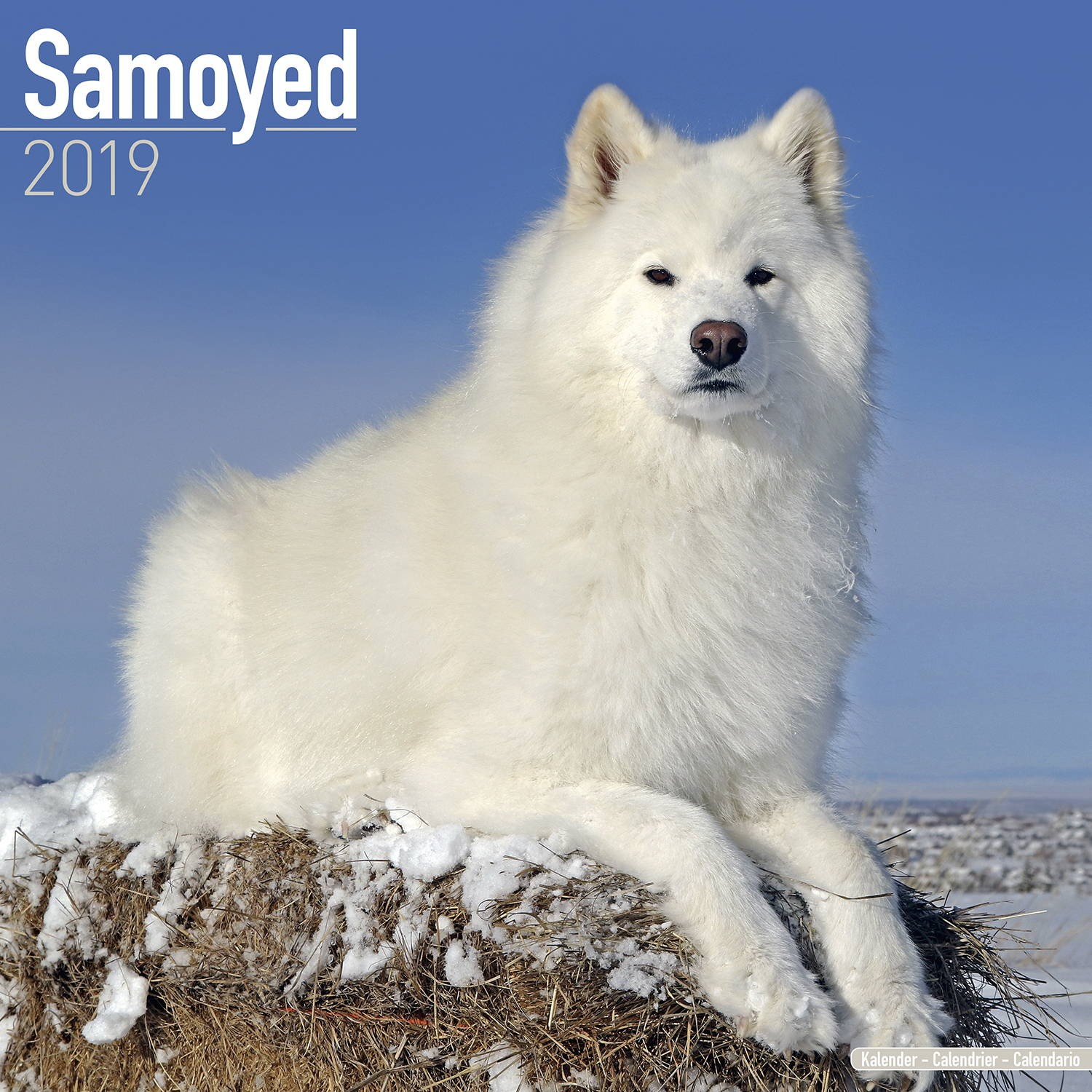 Samoyed Wall Calendar 2019