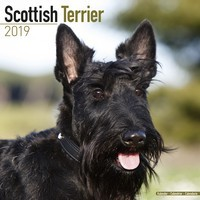 Scottish Terrier Wall Calendar 2019