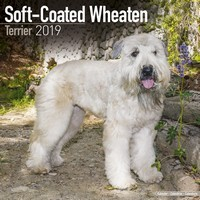 Softcoat Wheaten Terrier Wall Calendar 2019