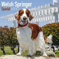 Welsh Springer Spaniel Wall Calendar 2019