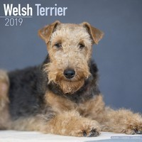 Welsh Terrier Wall Calendar 2019