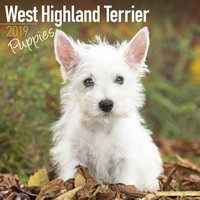 West Highland Terrier Puppies Wall Calendar 2019