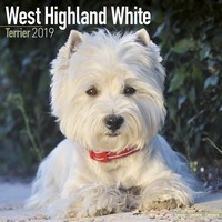 West Highland Terrier Wall Calendar 2019