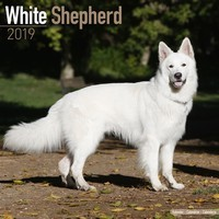 White Shepherd Wall Calendar 2019