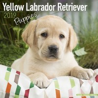 Yellow Labrador Puppies Wall Calendar 2019