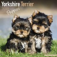 Yorkshire Terrier Puppies Wall Calendar 2019