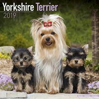 Yorkshire Terrier Wall Calendar 2019