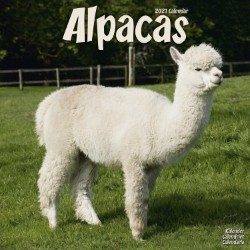 Alpacas Wall Calendar 2021 by Avonside