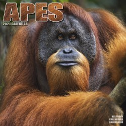 Apes Wall Calendar 2021 by Avonside