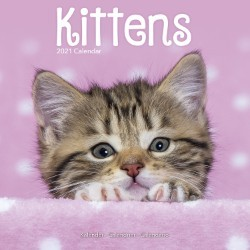 Kittens Wall Calendar 2021 by Avonside