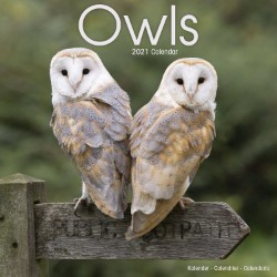 Owls Wall Calendar 2021 by Avonside