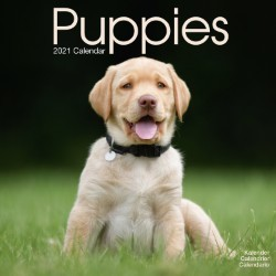 Puppies Wall Calendar 2021 by Avonside