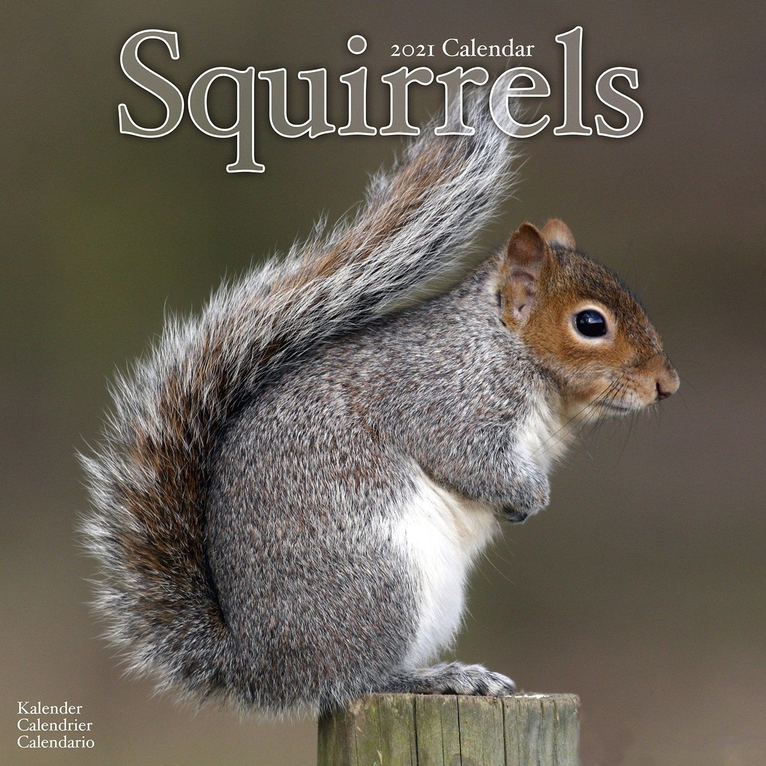 Squirrels Wall Calendar 2021 by Avonside