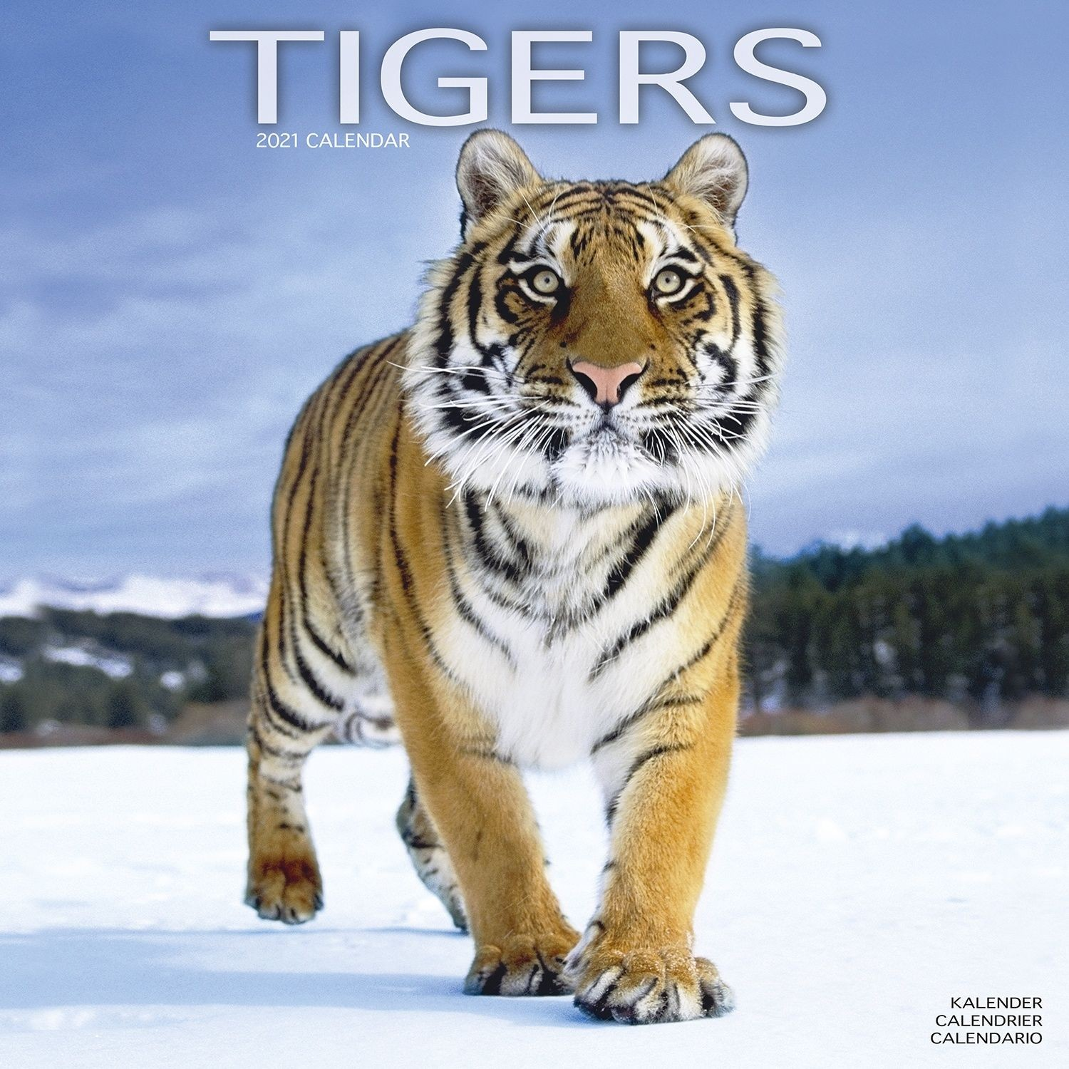 Tigers Wall Calendar 2021 by Avonside