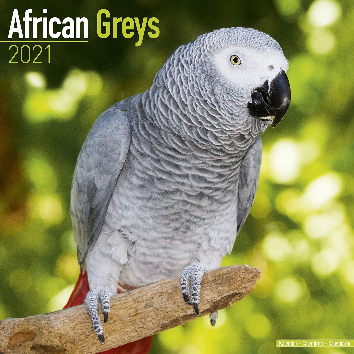 African Greys Wall Calendar 2021 by Avonside