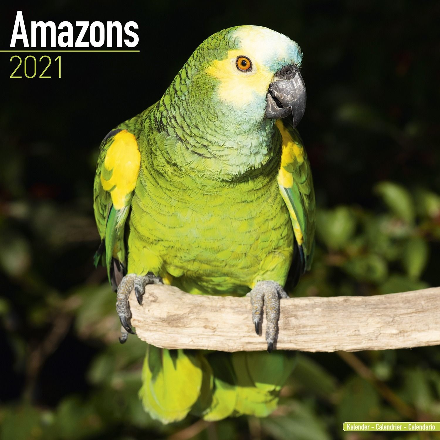 Amazons Wall Calendar 2021 by Avonside