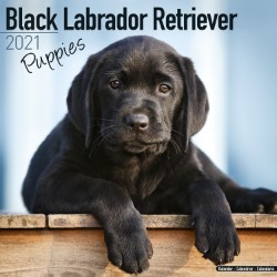 Black Labrador Puppies Wall Calendar 2021 by Avonside