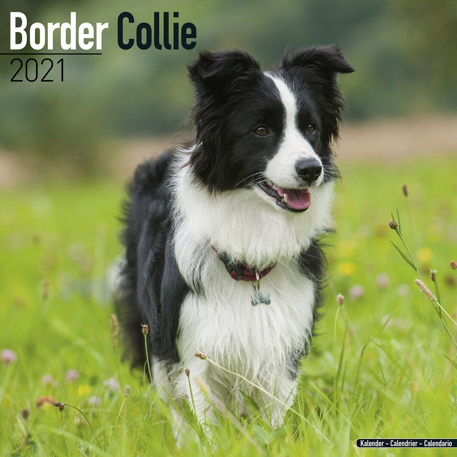 Border Collie Wall Calendar 2021 by Avonside