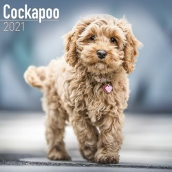 Cockapoo Wall Calendar 2021 by Avonside