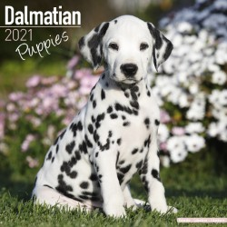 Dalmatian Puppies Wall Calendar 2021 by Avonside