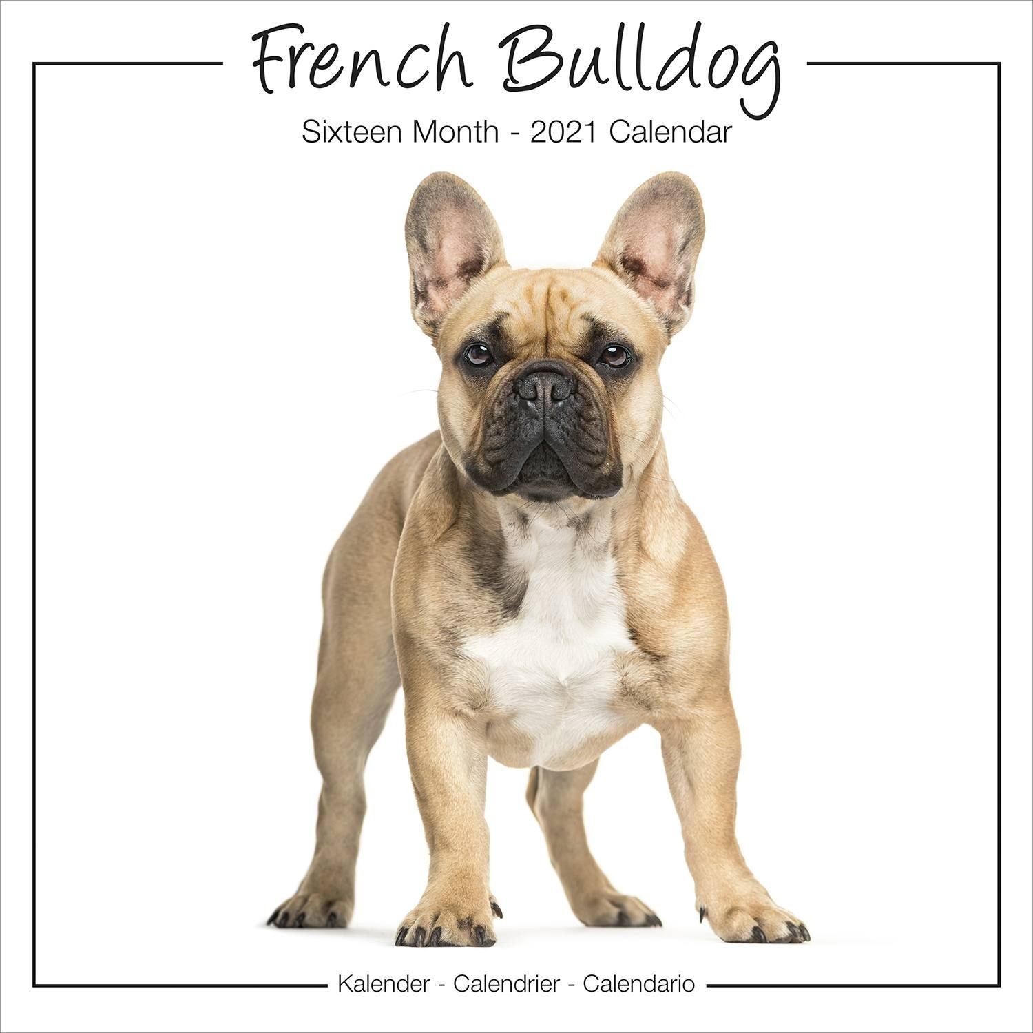 French Bulldog Studio Range Wall Calendar 2021