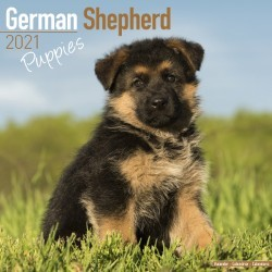 German Shepherd Puppies Wall Calendar 2021 by Avonside