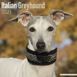 Italian Greyhound Wall Calendar 2021 by Avonside