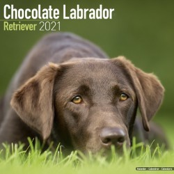 Chocolate Lab Retriever Wall Calendar 2021 by Avonside
