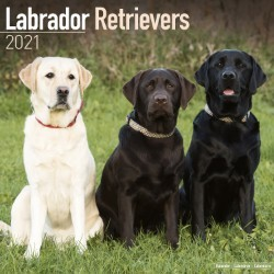 Labrador Retriever (Mixed) Wall Calendar 2021 by Avonside