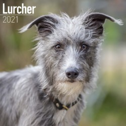 Lurcher  Wall Calendar 2021 by Avonside