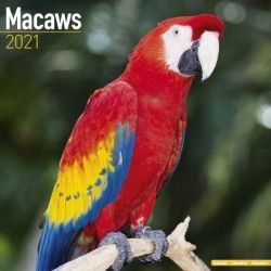 Macaws Wall Calendar 2021 by Avonside