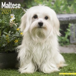 Maltese Wall Calendar 2021 by Avonside
