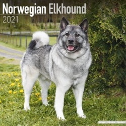 Norwegian Elkhound Wall Calendar 2021 by Avonside