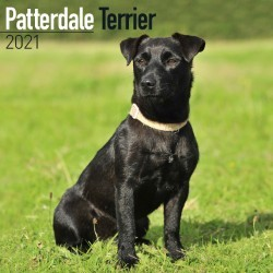 Patterdale Terrier Wall Calendar 2021