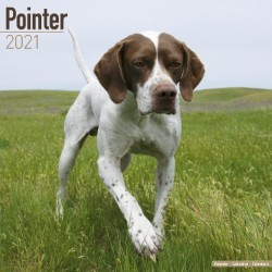 Pointer  Wall Calendar 2021 by Avonside