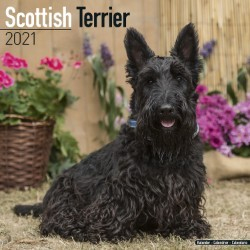 Scottish Terrier Wall Calendar 2021 by Avonside