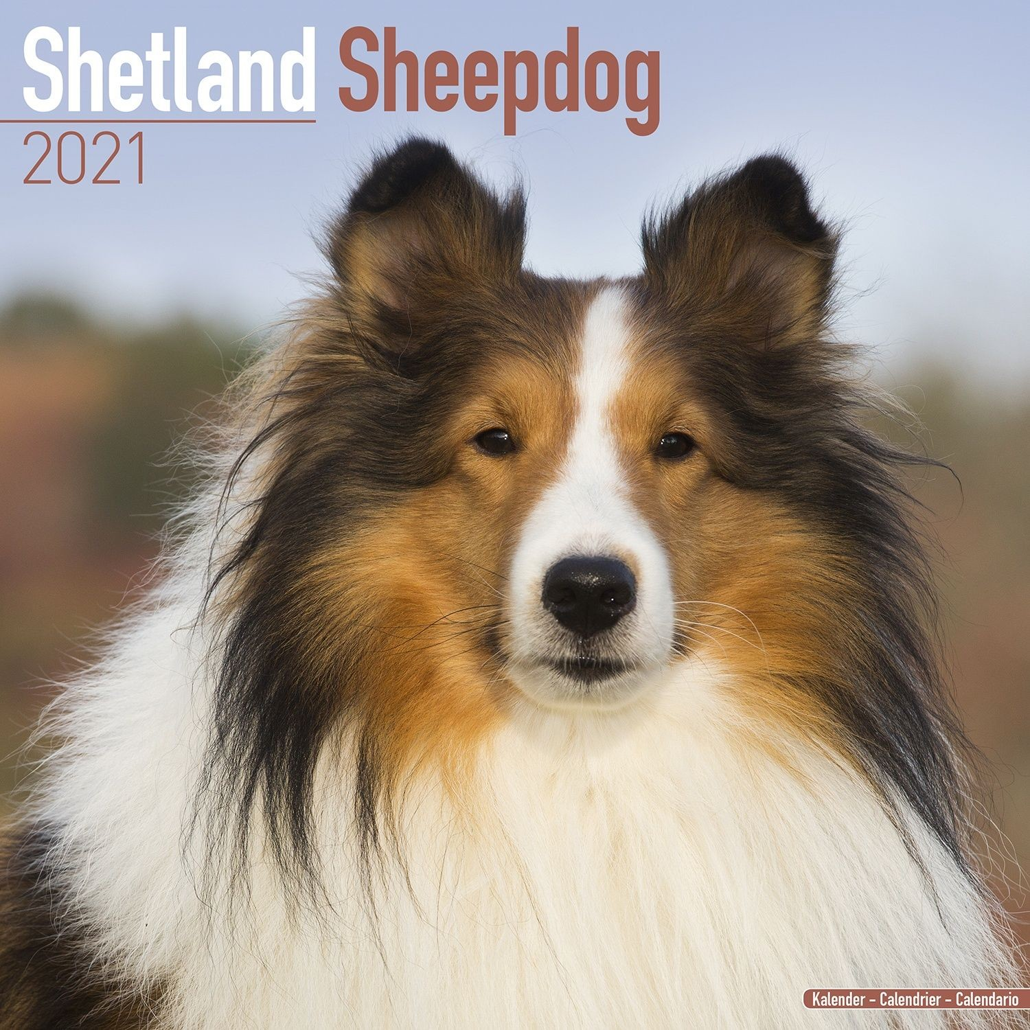 Shetland Sheepdog Wall Calendar 2021 by Avonside