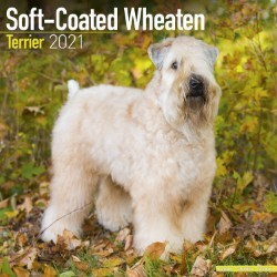 Softcoat Wheaten Terrier Wall Calendar 2021 by Avonside