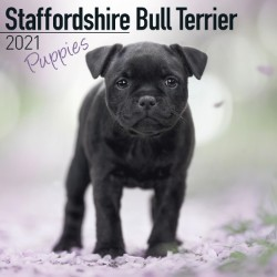 Staffordshire Bull Terrier Puppies Wall Calendar 2021