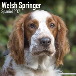 Welsh Springer Spaniel Wall Calendar 2021 by Avonside